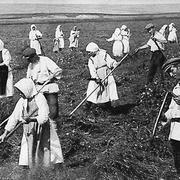 Сельские работники