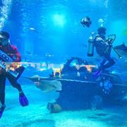 Подводный концерт
