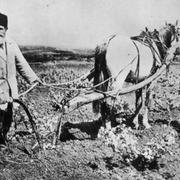 В 1916 году Особое совещание по продовольствию издало постановление о проведении 1-й Всероссийской сельскохозяйственной переписи